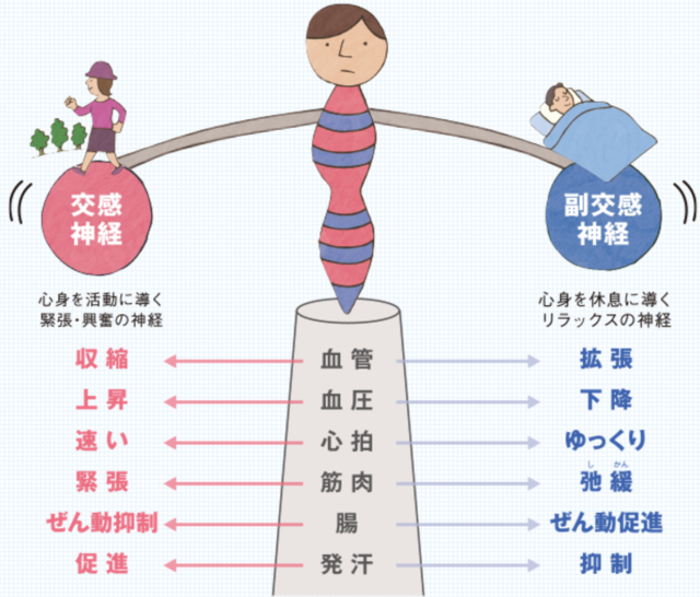 横須賀 ダイエット 自律神経